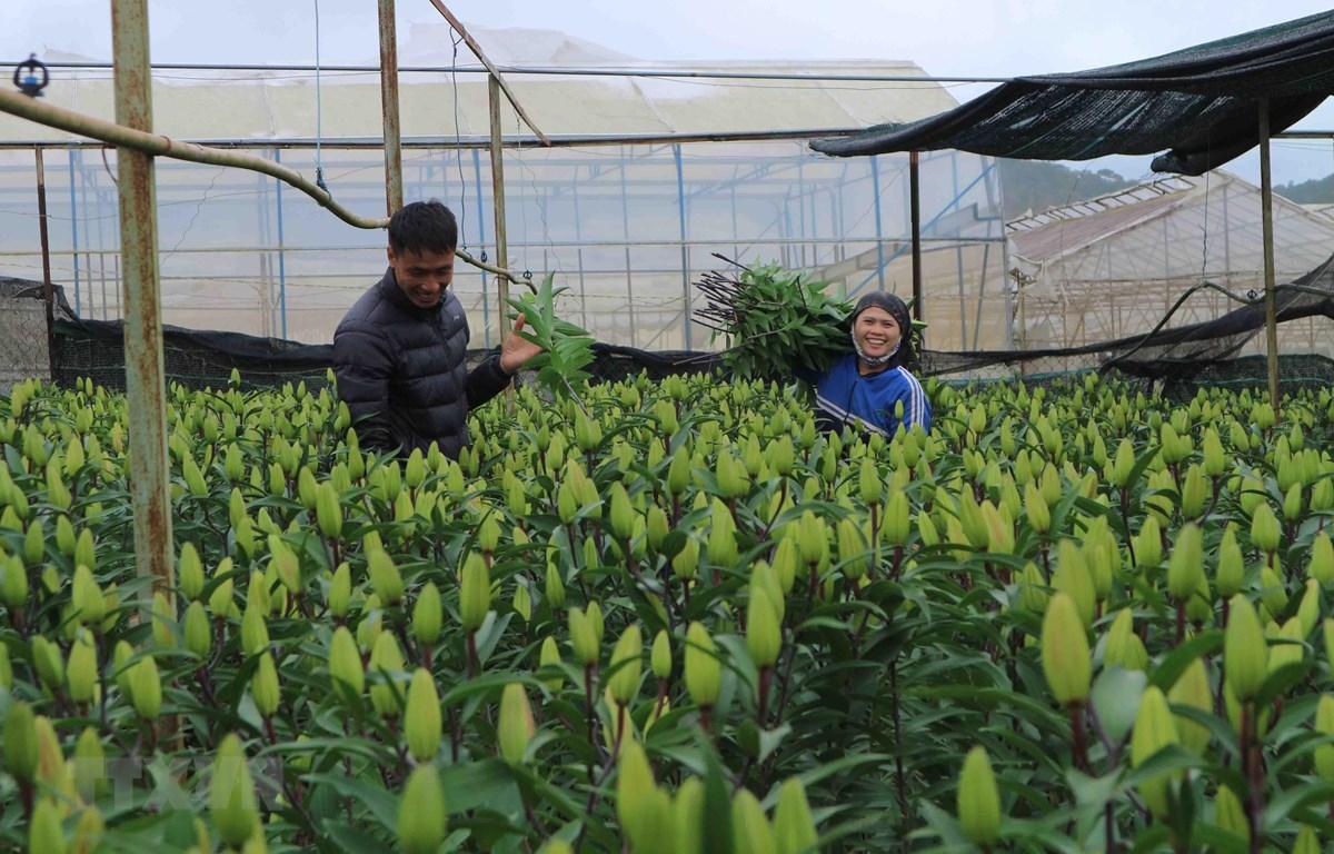 Bản quyền giống - điểm yếu của ngành xuất khẩu hoa tươi Việt Nam