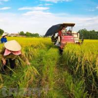 Thêm mùa 'đắng' ở thủ phủ hồ tiêu Bình Phước